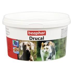 Drucal سگ بیفار