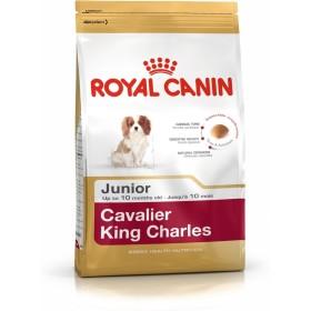 غذای خشک سگ نژاد کاوالیر کینگ چارلز 2 تا 10 ماه رویال کنین