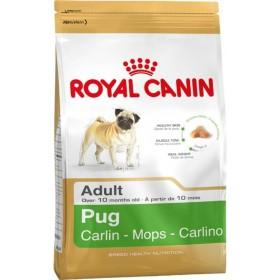 غذای خشک سگ نژاد پاگ بالای 10 ماه رویال کنین