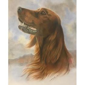 طراحی و نقاشی از عکس حیوانات خانگی